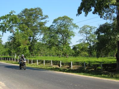 riding past more tea estates