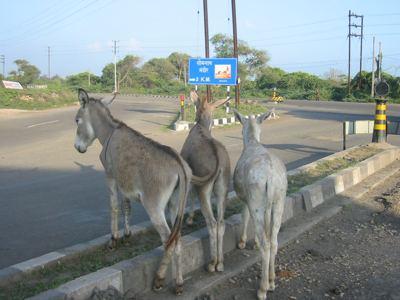3 sore asses on Bharat Parikrama