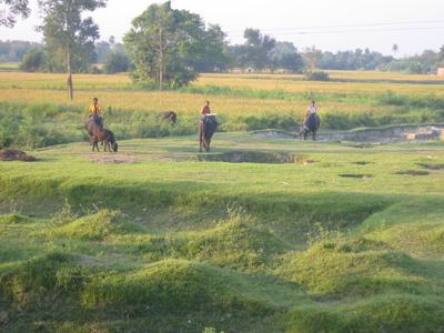 at play in the fields of Bihar